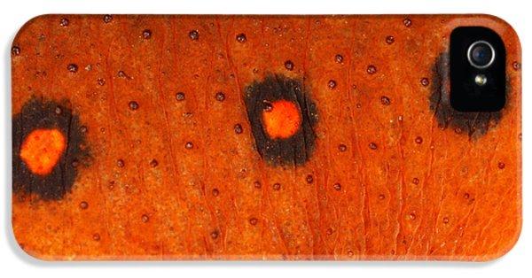 Skin Of Eastern Newt IPhone 5 Case