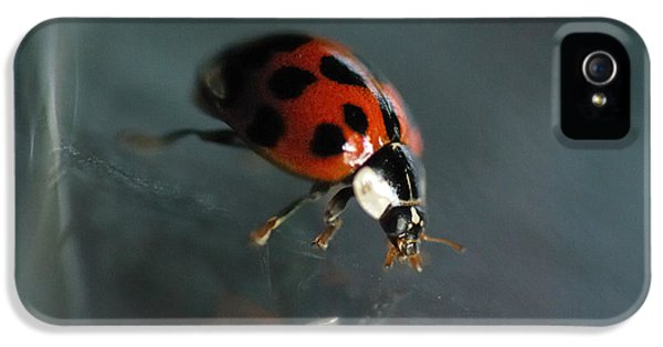 Ladybug iPhone 5 Case - Slip And Slide by Susan Capuano