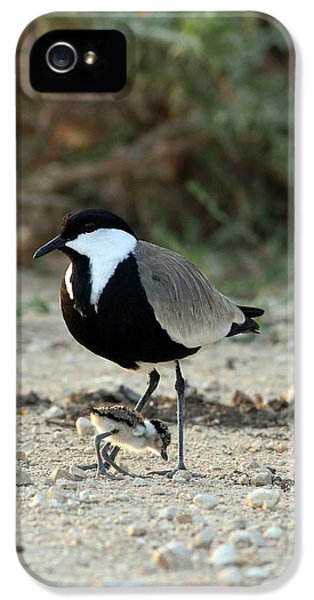 Spur-winged Plover And Chick IPhone 5 Case by Photostock-israel