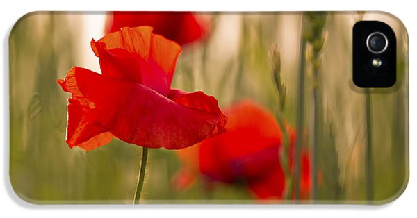 IPhone 5 Case featuring the photograph Sunset Poppies. by Clare Bambers