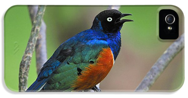 Superb Starling IPhone 5 Case by Tony Beck
