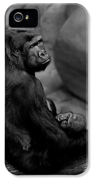 Tender Moment IPhone 5 Case by Sebastian Musial
