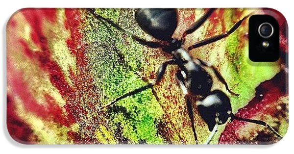 The Ants Have Arrived IPhone 5 Case by Christopher Campbell