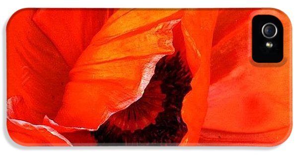 The Beautiful Icelandic Poppy IPhone 5 Case by Christopher Campbell