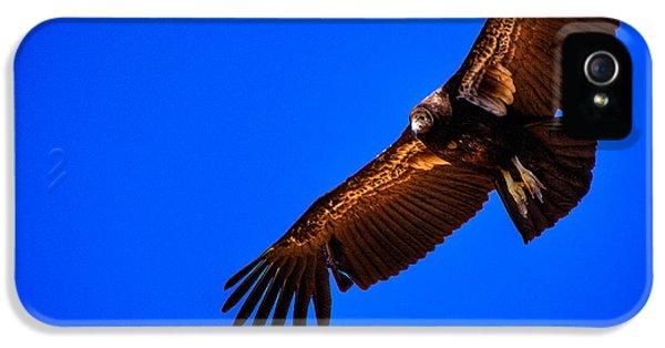 The California Condor IPhone 5 Case
