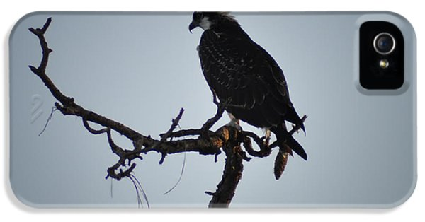 The Osprey IPhone 5 Case by Bill Cannon