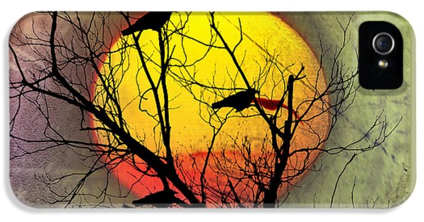 Three Blackbirds IPhone 5 Case by Bill Cannon