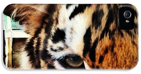 Cool iPhone 5 Case - Tiger by Lea Ward