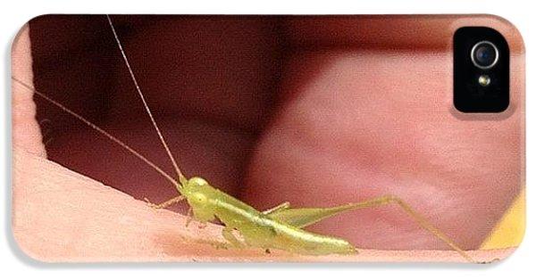Instagramhub iPhone 5 Case - Tiny Grasshopper by Cameron Bentley