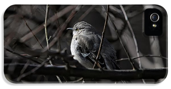 To Kill A Mockingbird IPhone 5 Case
