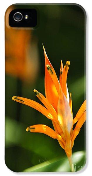 Tropical Orange Heliconia Flower IPhone 5 / 5s Case by Elena Elisseeva