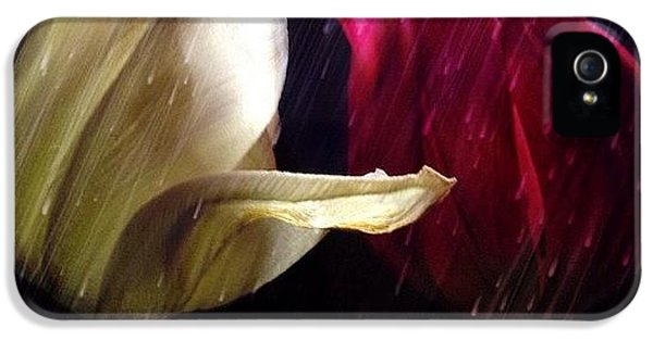Tulips In The Rain IPhone 5 Case by Paul Cutright