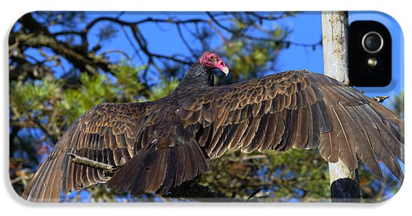Turkey Vulture With Wings Spread IPhone 5 Case