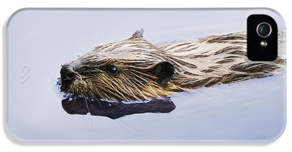 View Of Beaver, Chaudiere-appalaches IPhone 5 Case