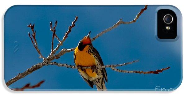 Meadowlark iPhone 5 Case - Western Meadowlark by Mitch Shindelbower