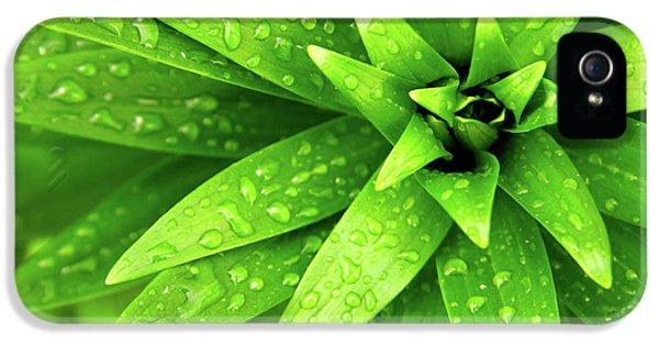 Wet Foliage IPhone 5 Case by Carlos Caetano