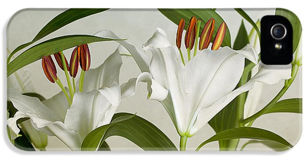 Lily iPhone 5 Case - White Lilies by Nailia Schwarz