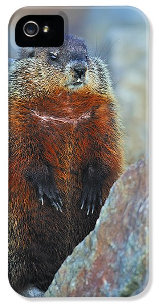 Woodchuck IPhone 5 / 5s Case by Tony Beck