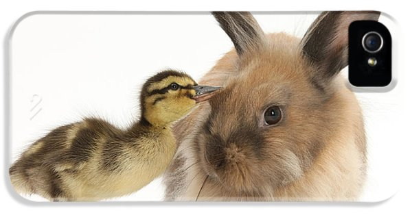 Young Lionhead-lop Rabbit And Mallard IPhone 5 Case