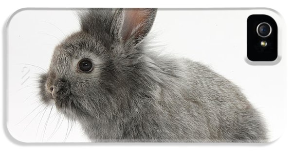 Young Silver Lionhead Rabbit IPhone 5 Case