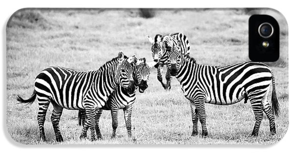 Zebras In Black And White IPhone 5 Case by Sebastian Musial