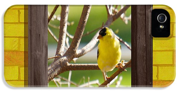 American Goldfinch IPhone 5 Case by Art Spectrum