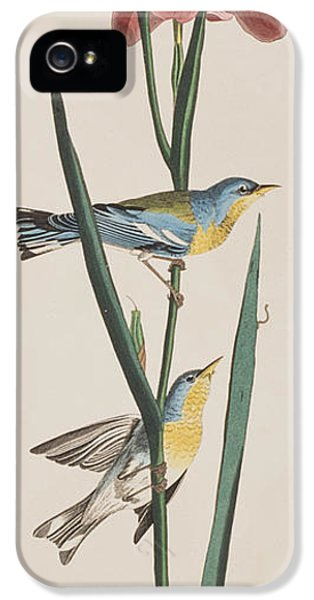 Blue Yellow-backed Warbler IPhone 5 Case