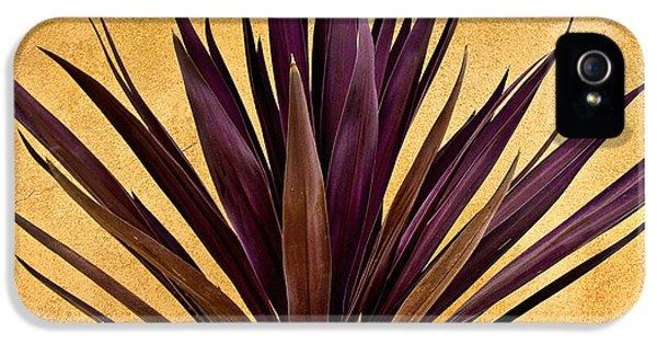 Purple Giant Dracaena Santa Fe IPhone 5 Case by John Hansen