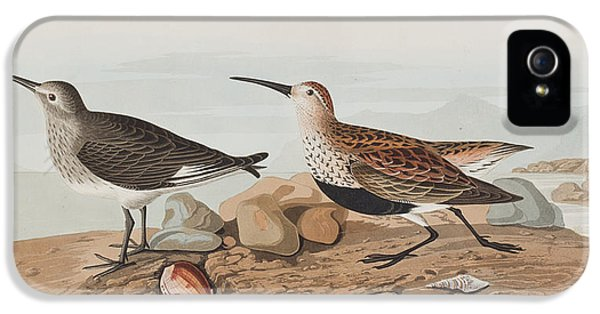 Sandpiper iPhone 5 Case -  Red Backed Sandpiper by John James Audubon