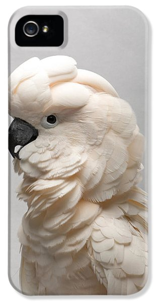 Cockatoo iPhone 5 Case - A Salmon-crested Cockatoo by Joel Sartore