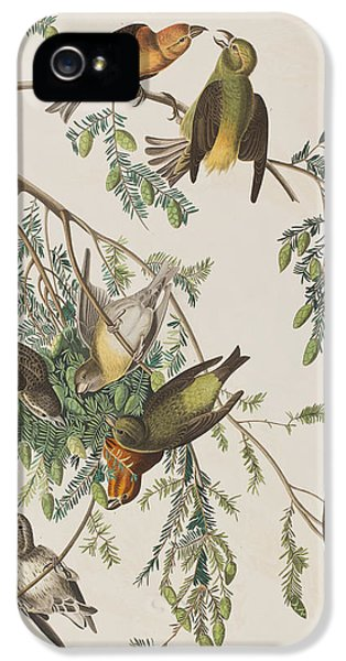 American Crossbill IPhone 5 Case by John James Audubon