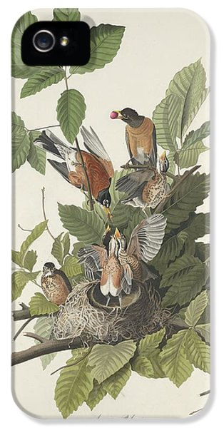 American Robin IPhone 5 Case by Dreyer Wildlife Print Collections