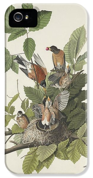 American Robin IPhone 5 Case by Rob Dreyer