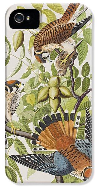 American Sparrow Hawk IPhone 5 Case by John James Audubon