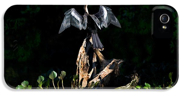 Anhinga Anhinga Anhinga, Pantanal IPhone 5 Case by Panoramic Images
