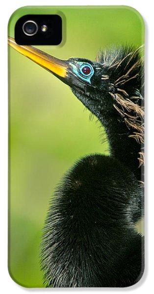 Anhinga Anhinga Anhinga, Tortuguero IPhone 5 / 5s Case by Panoramic Images