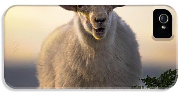 Sheep iPhone 5 Case - Baa Baa by Angel Ciesniarska
