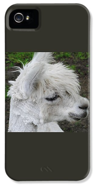 Baby Llama IPhone 5 Case
