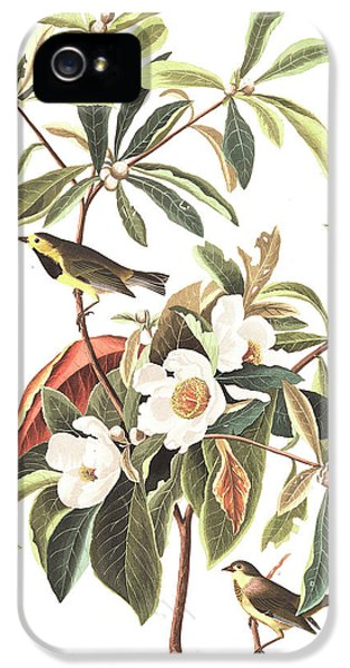 Bachman's Warbler  IPhone 5 Case by John James Audubon