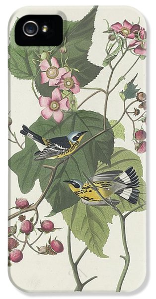 Black And Yellow Warbler IPhone 5 Case