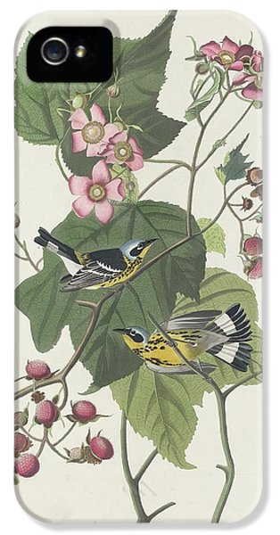 Black And Yellow Warbler IPhone 5 Case by Rob Dreyer
