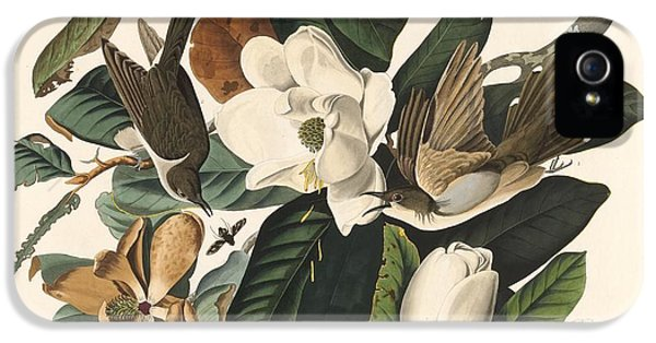 Black-billed Cuckoo IPhone 5 Case by Rob Dreyer