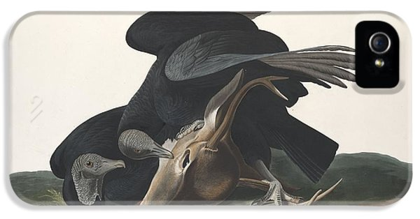 Black Vulture IPhone 5 Case