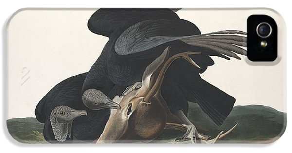 Black Vulture IPhone 5 Case by Rob Dreyer