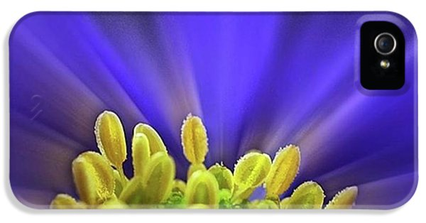 Beautiful iPhone 5 Case - blue Shades - An Anemone Blanda by John Edwards