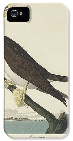 Booby Gannet IPhone 5 Case by Dreyer Wildlife Print Collections
