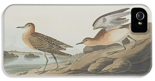 Buff-breasted Sandpiper IPhone 5 Case