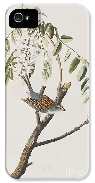 Chipping Sparrow IPhone 5 Case by John James Audubon