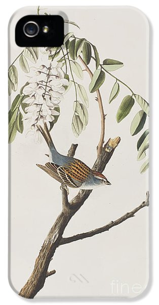 Chipping Sparrow IPhone 5 Case