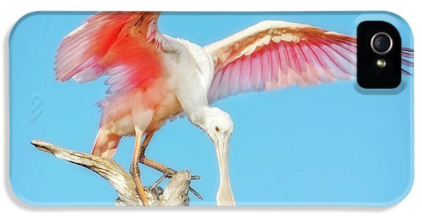 Spoonbill Cleared For Takeoff IPhone 5 Case